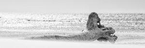 Baumstamm auf der Sandbank