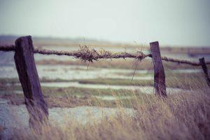 Treibsel am Zaun vor der Salzwiese in SPO