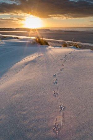 Vogelspuren auf Sanddüne im Sonnenuntergang