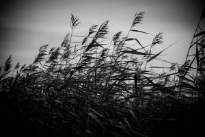 Das Windspiel im Schilff
