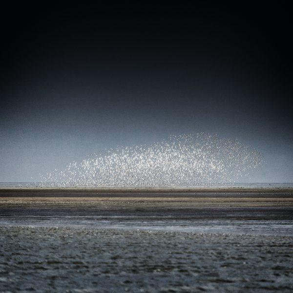 Vogelschwarm über der Sandbank - 2019-109-_MG_5132-Bearbeitet